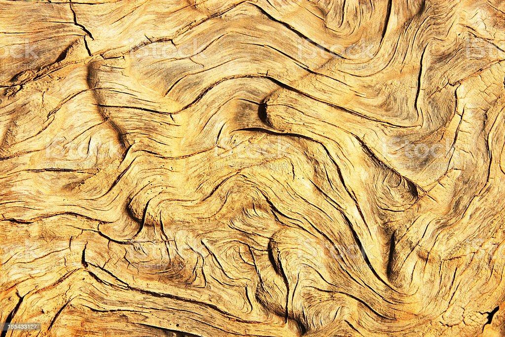 Wood Grain Pattern Juniper Tree stock photo