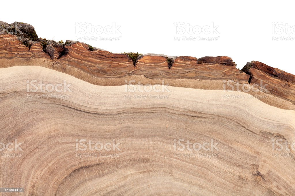 Wood grains from the top view of a trunk stock photo