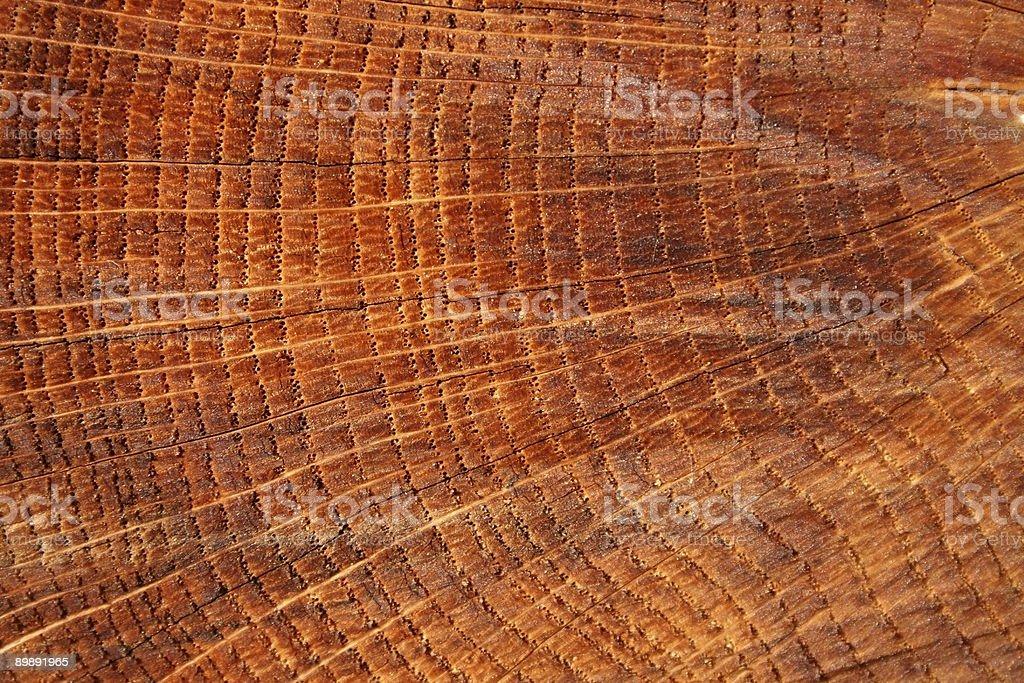 Anillo de crecimiento de madera foto de stock libre de derechos
