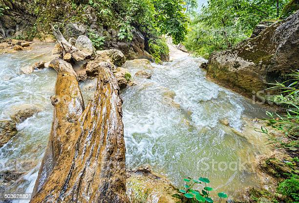 Photo of Wood log across rapid mountain river