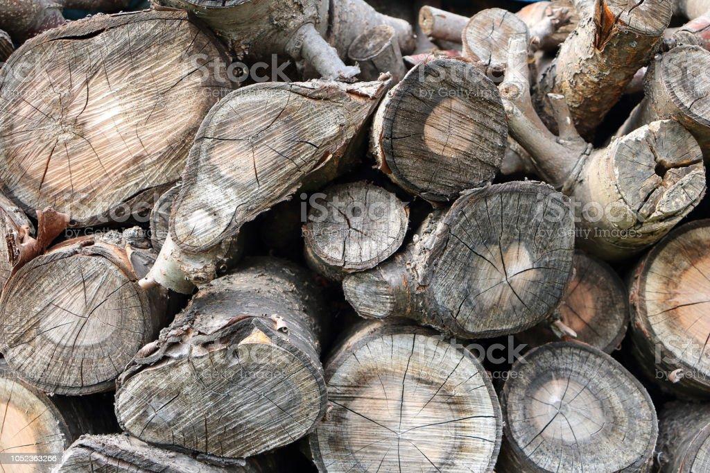 Wood Log Background Common Walnut Tree Wood With Weathered