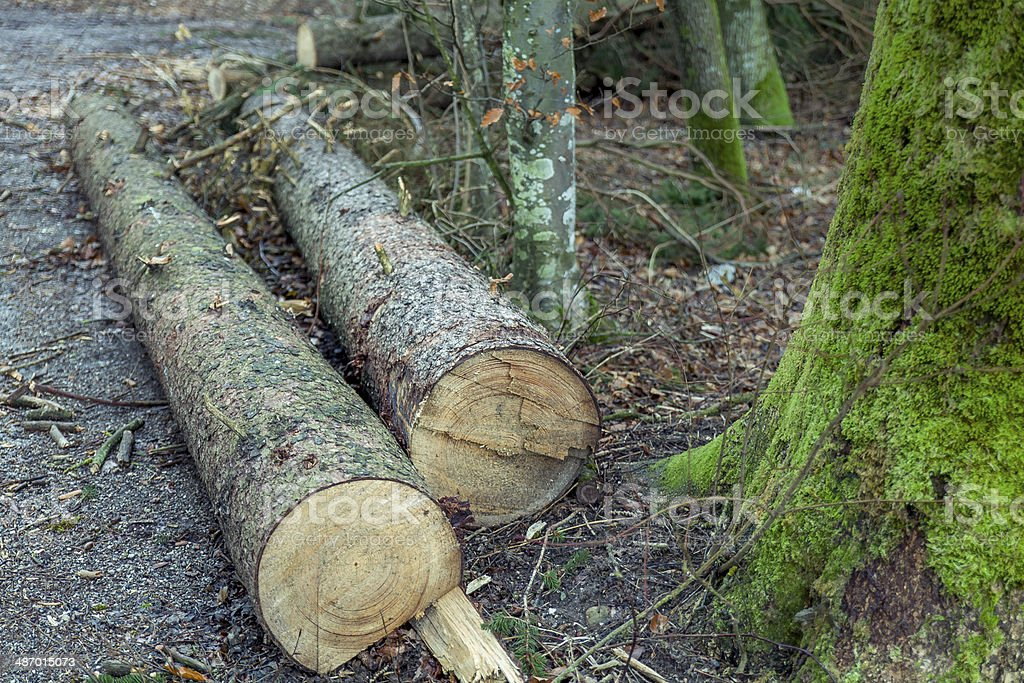 Wood logs royalty-free stock photo