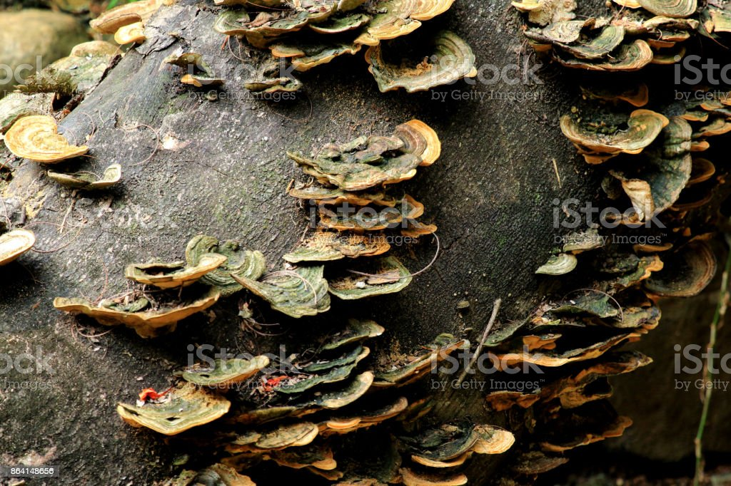 wood mushrooms royalty-free stock photo