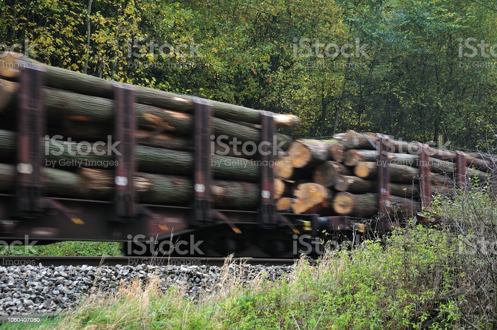 Holz auf Güterzug – Foto