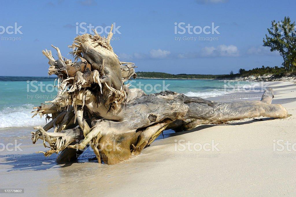 Wood on the Beach, Bahamas royalty-free stock photo