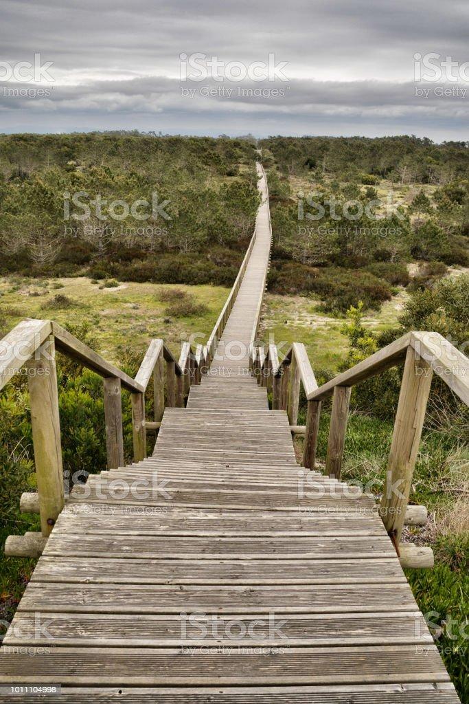 Trayectoria de madera en la Reserva Natural de São Jacinto (Aveiro, Portugal). - foto de stock