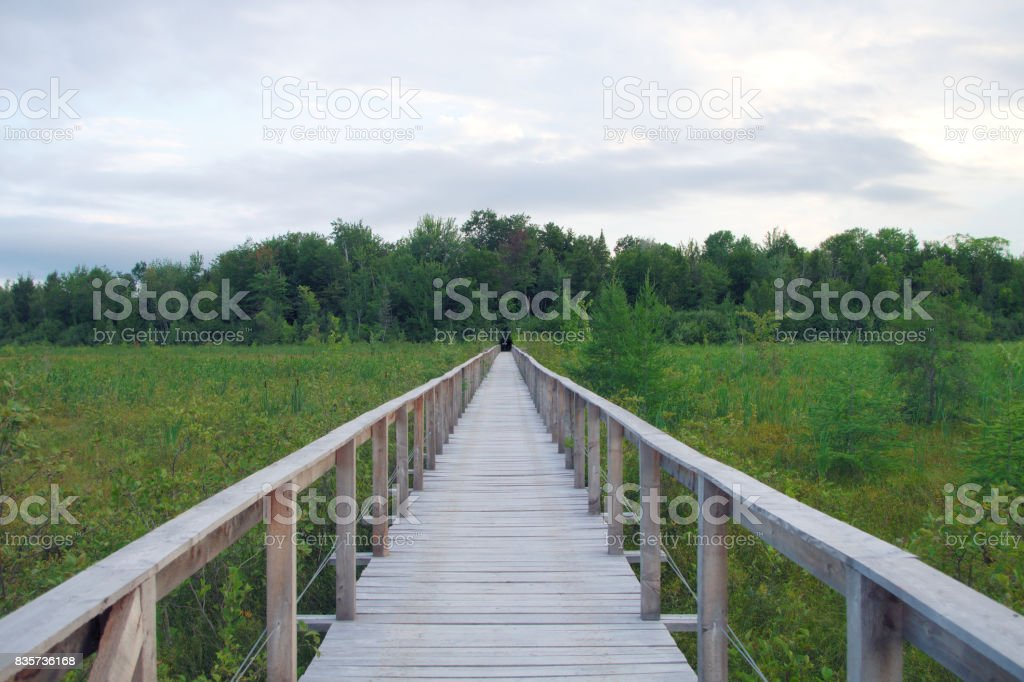 wood path bridge boardwalk green swamp landscape environment stock photo