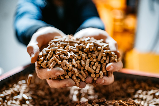 A man holds wood pellets in his hands. Biofuels. Renewable energy source. Pressed sawdust for industrial use. Alternative bio fuel. Wood filler used in cat litter.