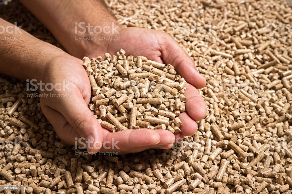 Wood pellets in male hands. Biofuels. Cat litter. stock photo