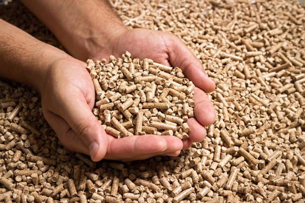 Wood pellets in male hands. Biofuels. Cat litter. stock photo