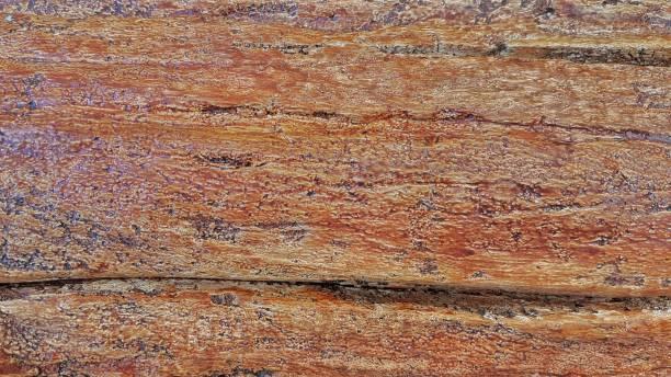 Holz – Foto