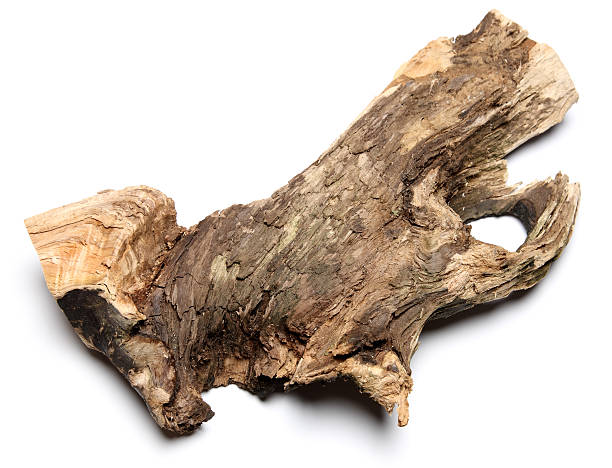 wood wood driftwood stock pictures, royalty-free photos & images