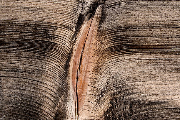 wood - vagina stock photos and pictures