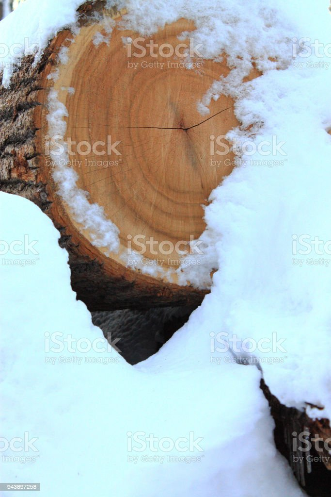Wood pile in snow stock photo