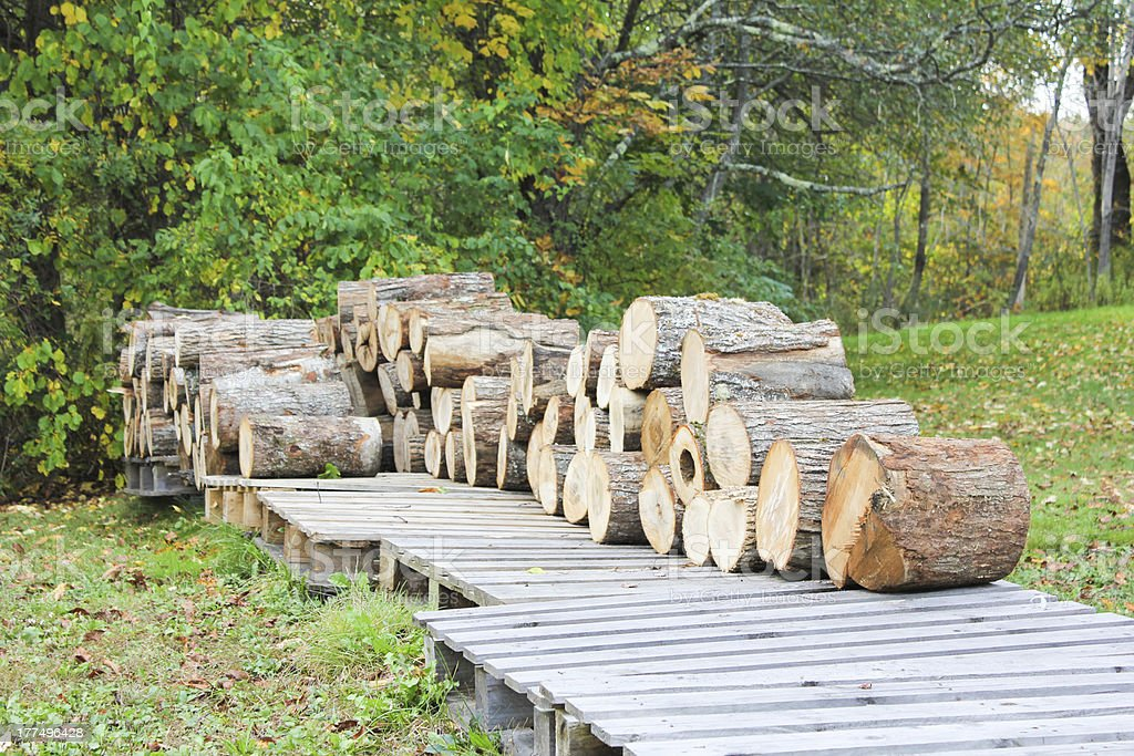 Wood Pile on Pallettes royalty-free stock photo