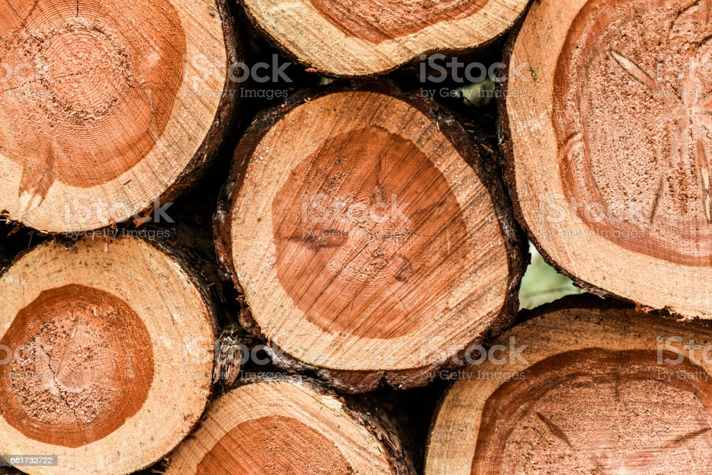 Wood piled up in the forest stock photo