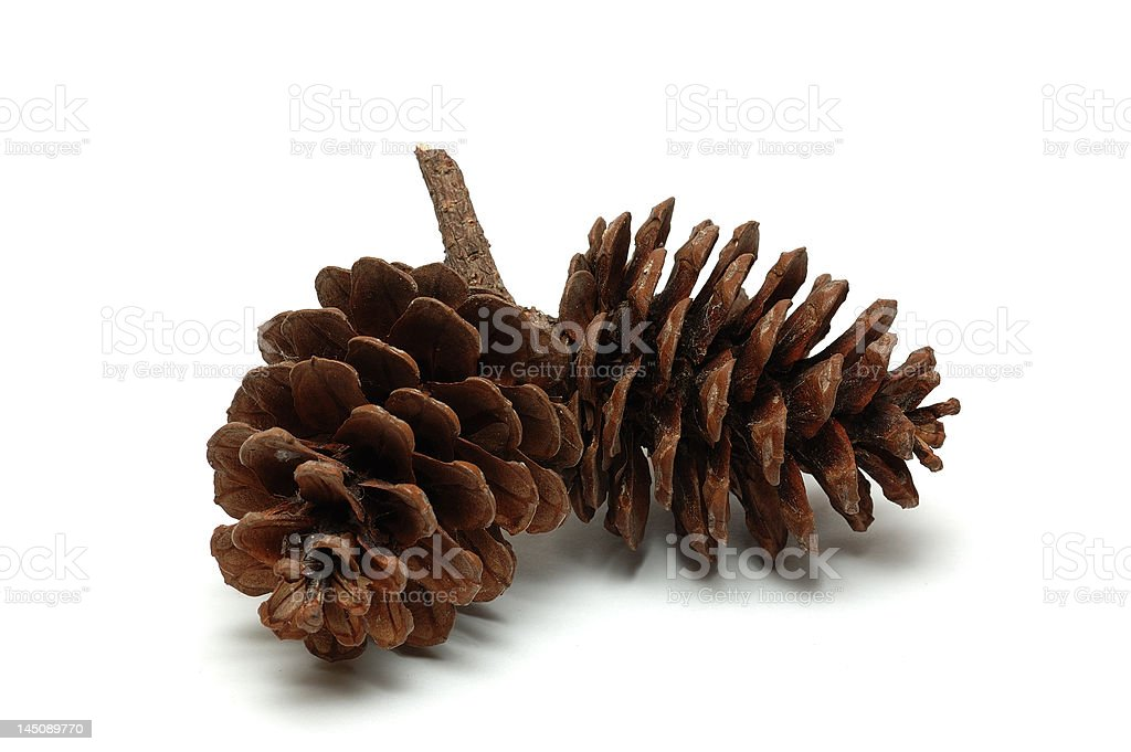 Wood pine fir cones royalty-free stock photo
