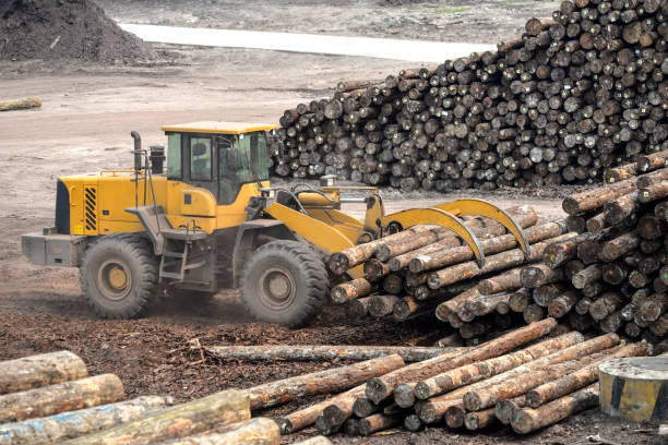 wood processing factory - logging equipment stock photos and pictures