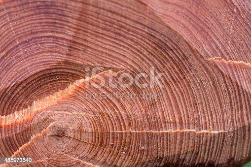istock Wood rings 485973540