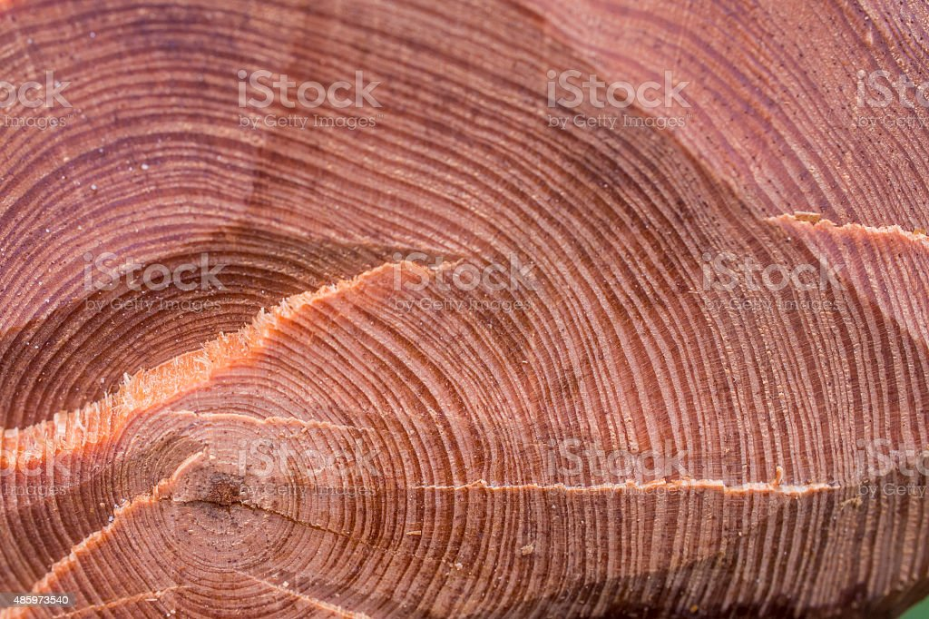 Wood rings stock photo