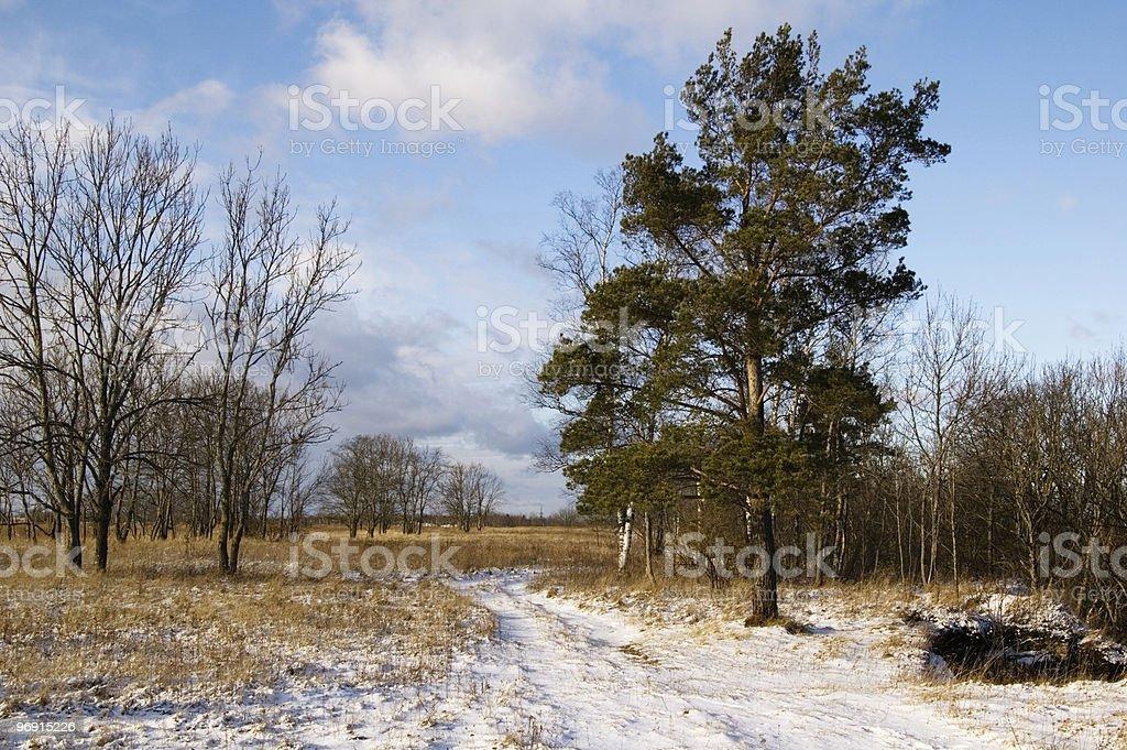 Wood road royalty-free stock photo