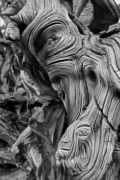 wood root background - knotted wood stock pictures, royalty-free photos & images