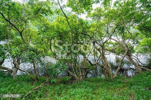 Wood roots in Lau Shui Heung Reservoir, Hong Kong