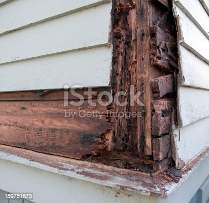 Termite damage and wood rot showing beneath siding. 3rd in a series.