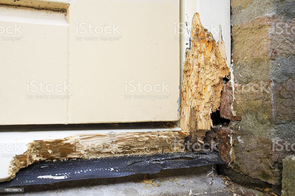 Wood rot stock photo