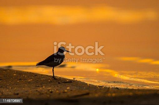 A beautiful wild bird on a nice background