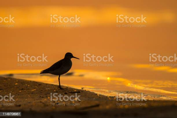 Wood sandpiper silhouette of a bird on the background of the lake at picture id1149708951?b=1&k=6&m=1149708951&s=612x612&h=wscm2qtjbygnoatybkb1rtsg0yyrbe76i5e84znqthq=