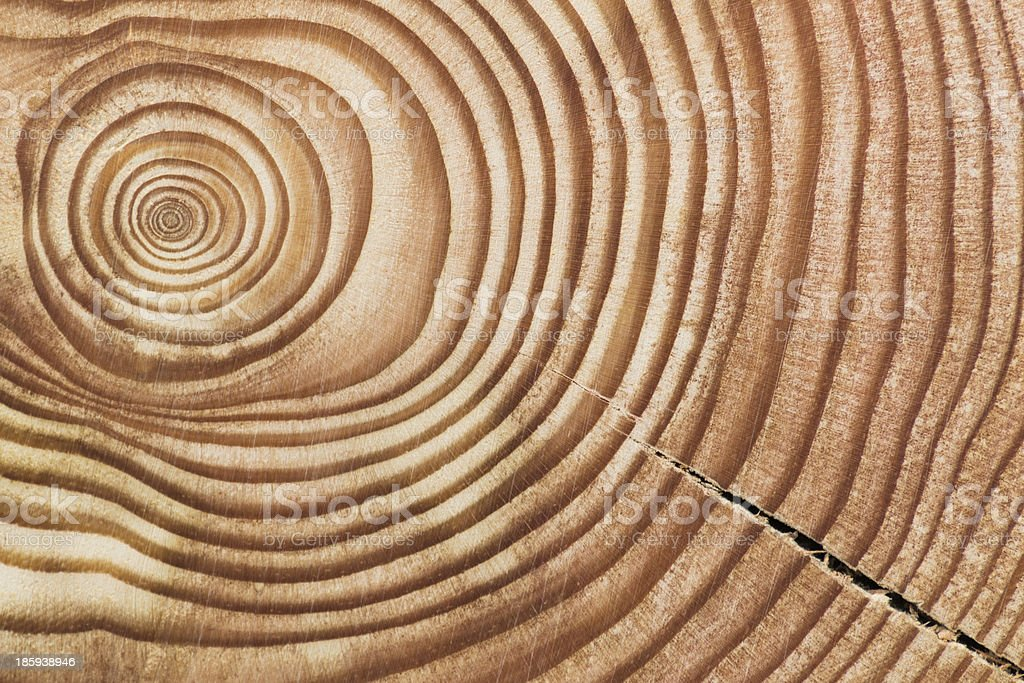Wood section. stock photo
