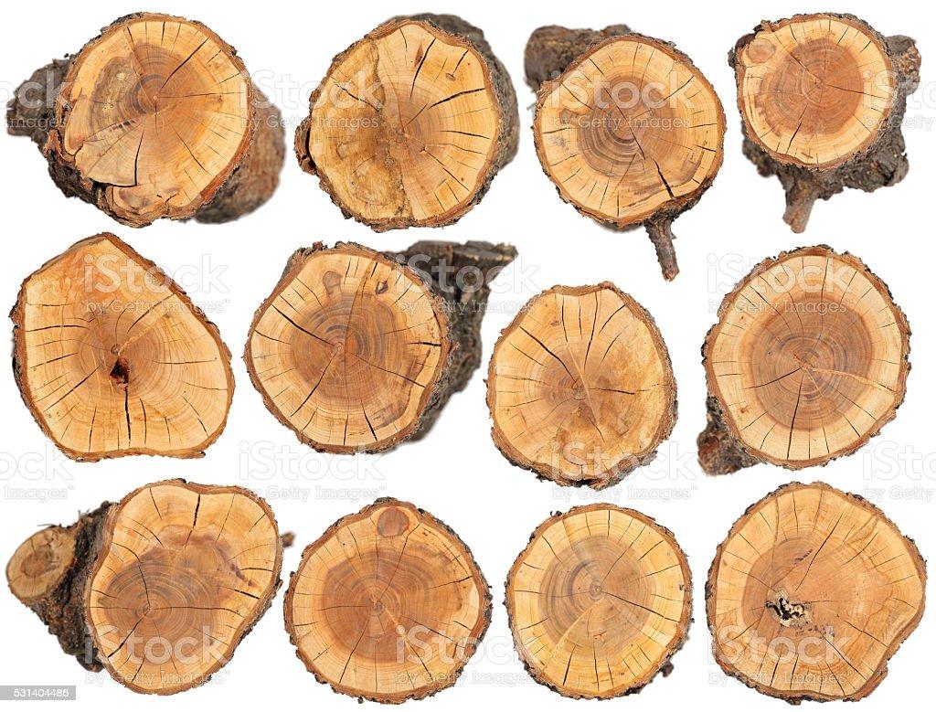 Wood slice texture stock photo
