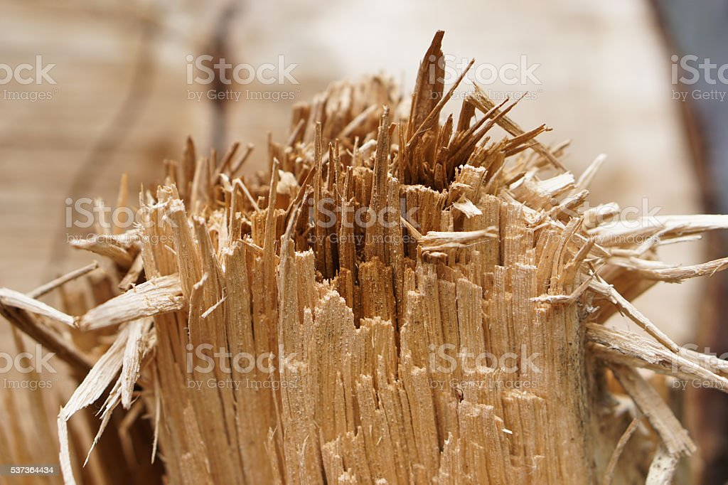 wood slivers stock photo