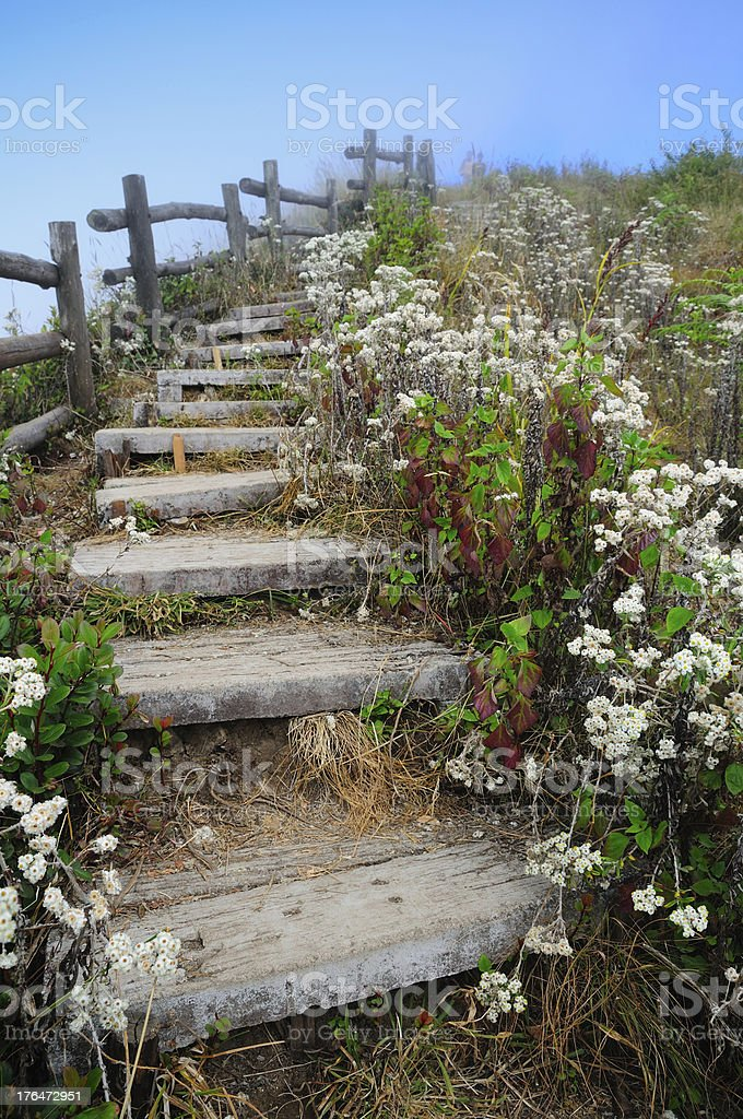 Wood stairway lined with white flowering royalty-free stock photo