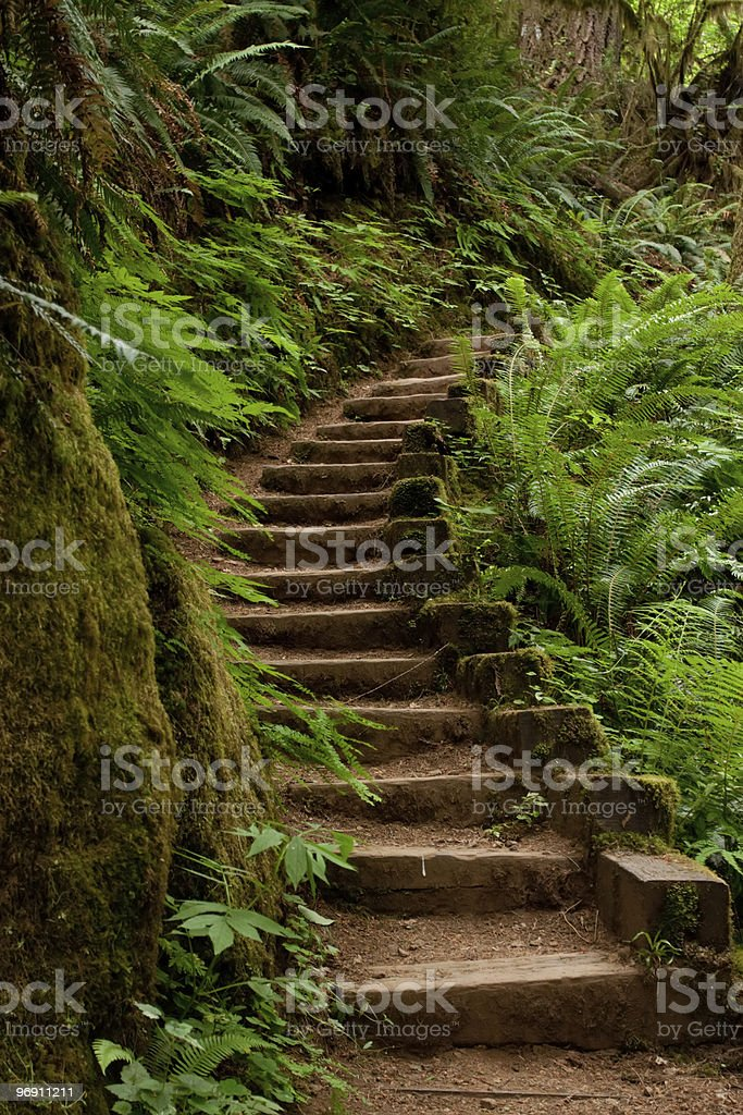 Wood steps leading to the trail royalty-free stock photo