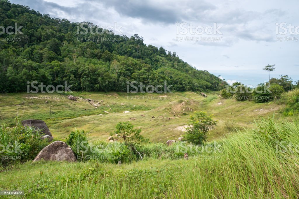 Wood ,Stone  and green grass royalty-free stock photo