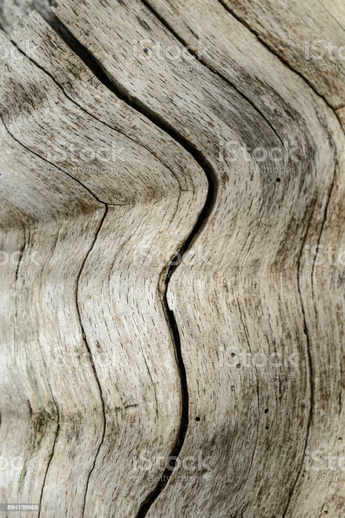 Wood structure background with bending lines royalty-free stock photo
