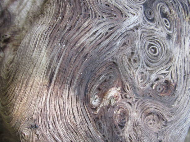 Wood swirls stock photo