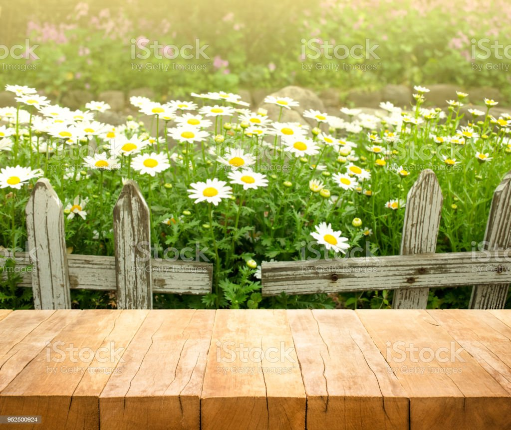 Wood Table Top On White Flower With Fence In Garden Background Stock