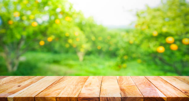 tavolo in legno con sfocatura top arancione giardino della fattoria. - frutteto foto e immagini stock