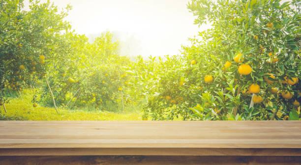 holz-tischplatte mit blur der orangengarten morgen. - streuobstwiese stock-fotos und bilder