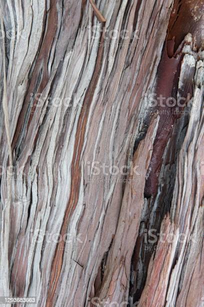 Photo of Wood texture and background Santa Cruz Island Ironwood