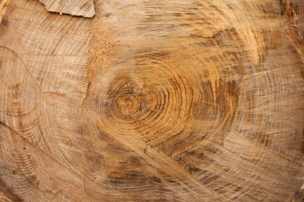 wood texture background, wooden bark close up. grunge textured image - woodcut stock photos and pictures
