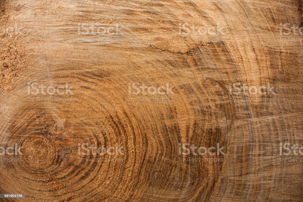 Wood texture background, wooden bark close up. Grunge textured image stock photo