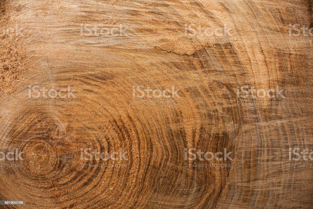 Fondo de textura de madera, corteza de madera de cerca. Imagen con textura Grunge - foto de stock