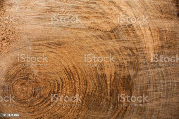 Photo of Wood texture background, wooden bark close up. Grunge textured image