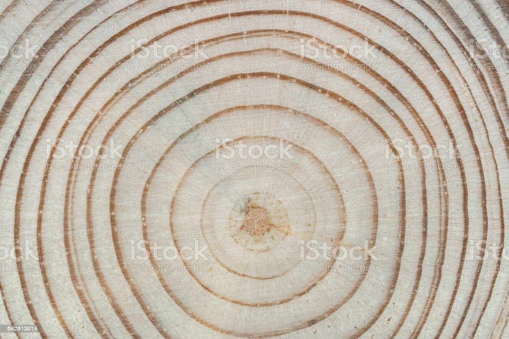 Wood texture. Cross saw cut pine with annual rings close-up. stock photo