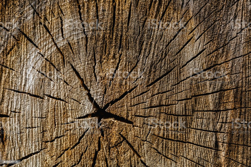 Wood texture of cut tree trunk stock photo