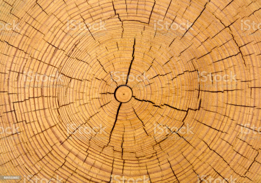 Textura de madera cutted troncos - foto de stock